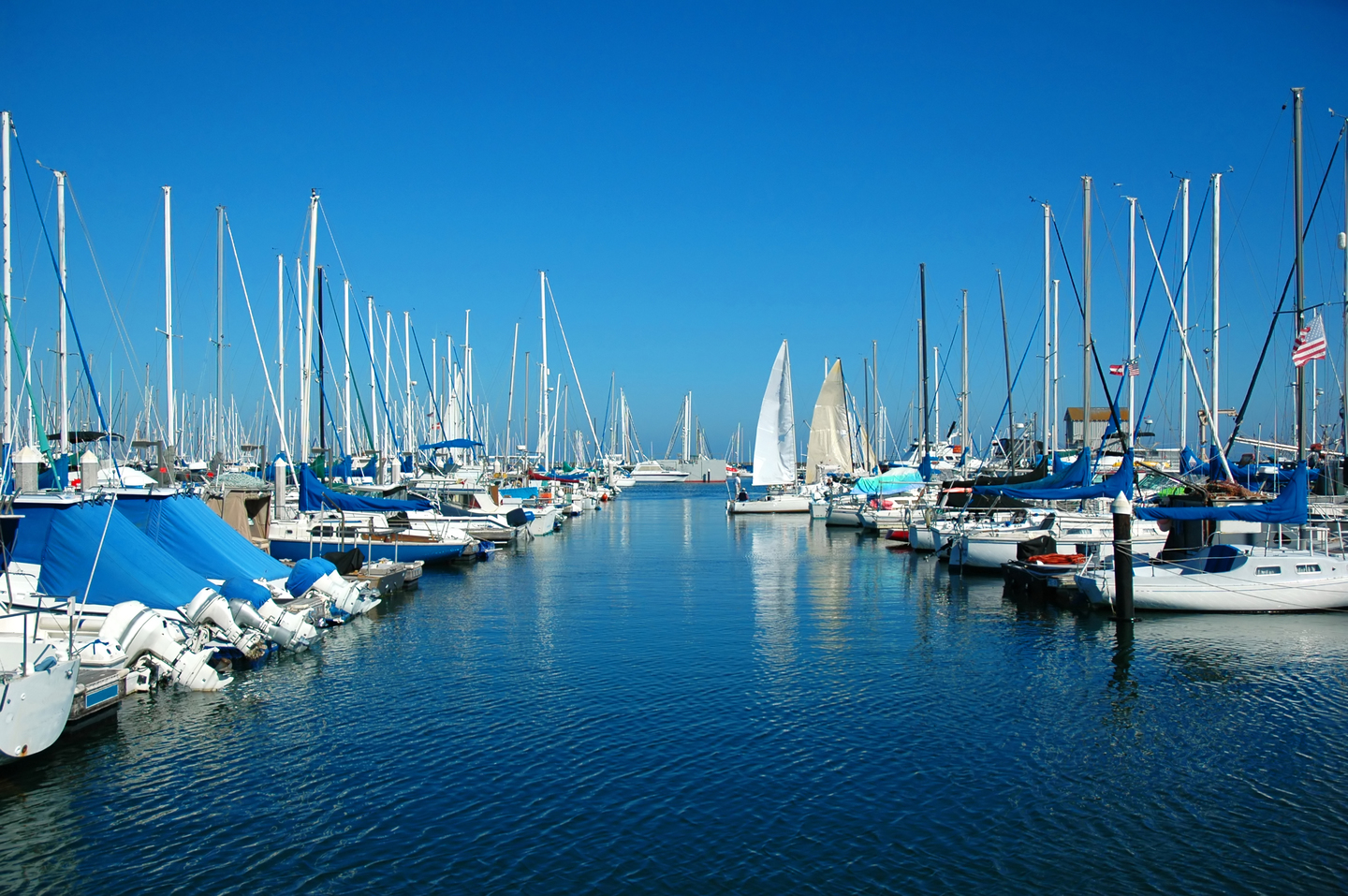 Boats and yachts in a marina